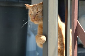 Mimi sur le balcon 5