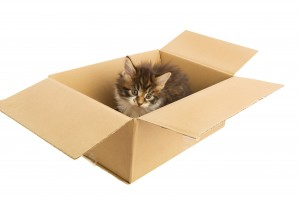 Maine Coon kitten in carton box