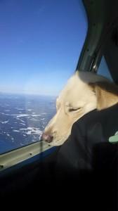 Pilot N Paws