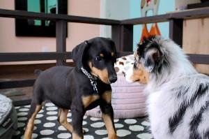 Doggy Café 3