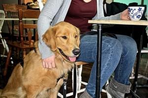 Doggy Café 4