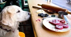 Doggy Café 9