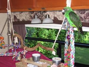 Perroquets 6