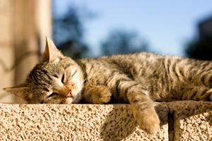 Young brown tabby cat sleeping on the wall. Selective focus.
