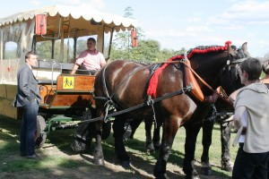 Cheval - Transport scolaire