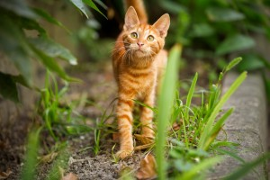 Cute domestic kitten looking up, outdoor