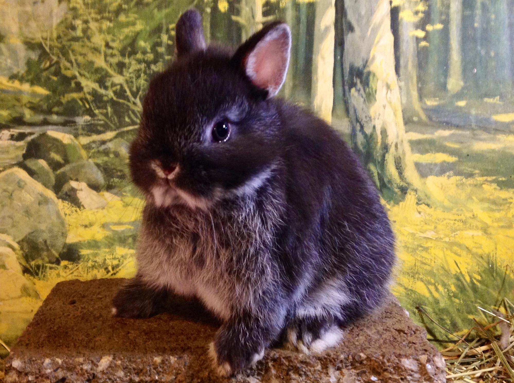 lapins 101 r alit animale blogue sur la vie animale. Black Bedroom Furniture Sets. Home Design Ideas