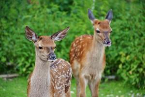 carnets-animaliers-3-3