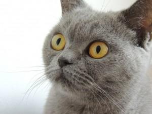 Votre chat vous parle (1)