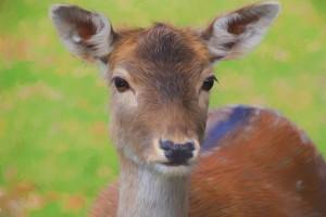 Carnets animaliers - Daim 2